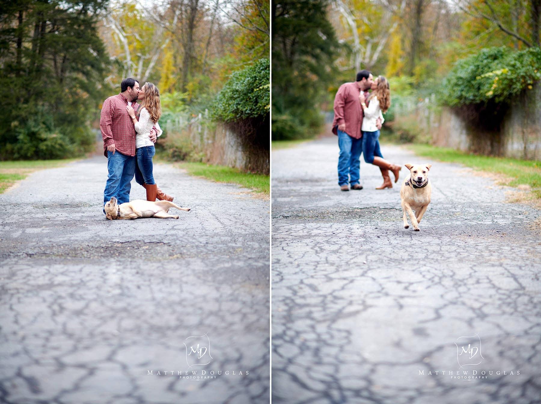 silly dog nj engagement photo