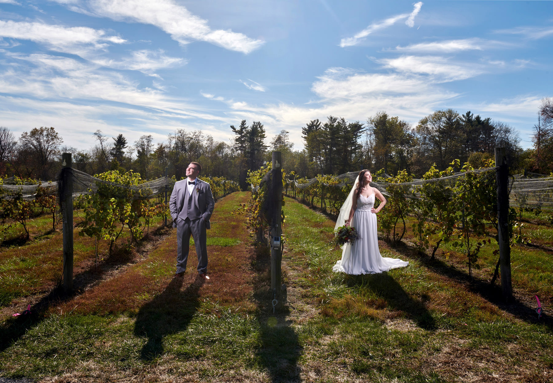 vineyard wedding photo at old york cellars